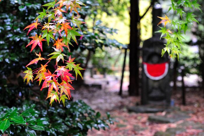 紅葉色付く秋は、金沢の風情をあでやかに彩ります。「金沢おどり」「金沢マラソン」「スイーツ博」などのイベントが開催されるのもこの季節。9月10月は都市部と同じかやや涼しいくらいの気候ですが、11月になると冬物コートを羽織って行くのがベターです。