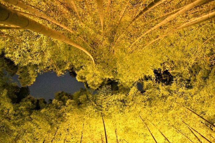 嵐山花灯路は、12月8日~17日の17時~20時30分に開催(2018年)。渡月橋のライトアップはもちろん、人気の「竹林の小径」や嵐山のあちらこちらが、あたたかい灯りで照らされ、艶やかな世界を愉しむことができます。紅葉時期を過ぎてしまっても、嵐山には見どころがたくさん。ぜひ訪れてみてくださいね。