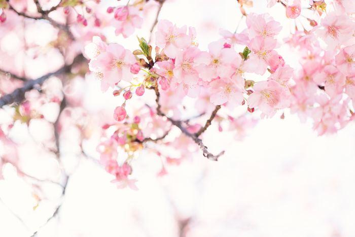 春は、エアプランツの成長期なので水をたくさん吸収してくれます。梅雨の時期は霧吹きではなく、雨に当ててあげるのも良いでしょう。エアプランツは寒さに弱いので、冷たすぎるお水は避けて下さいね。