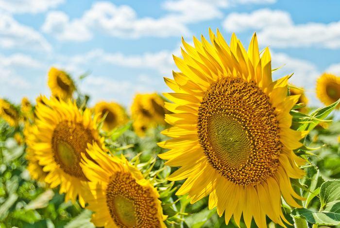 夏の水やりは、気温が下がる夕方からするようにしましょう。湿気が多くなる時期なので控えめに。エアプランツは30度以上の高温環境は苦手ですが、だからといってクーラーの風が直接当たるような場所で育てるのはNG。乾燥させるときもサーキュレーターや自然の風をあてるようにしてあげて下さい。