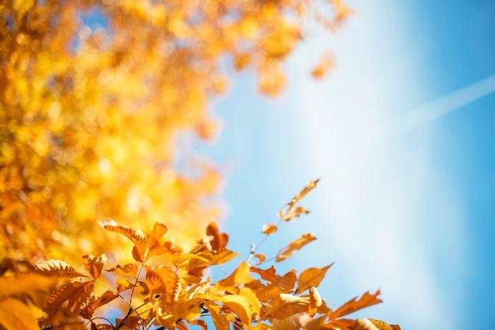 気温が上がったり下がったりする秋の水やりは、お水を室温程度に調節してからあげましょう。秋は春と同じでエアプランツの成長期と言われています。この時期は、乾燥し過ぎないよう適度に水やりを心がけるようにして下さいね。