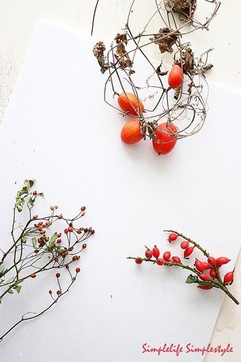 朝晩が少し肌寒くなってくる頃、ふと庭先や散歩道の景色に赤く色付いた実を見つけると、いよいよ秋がやってきたなあという気持ちになりますよね。最近では、実をつけた枝ものを幅広く扱う個性派のお花屋さんやネット通販もあり、お気に入りを手軽に買える機会も増えてきたのではないでしょうか。