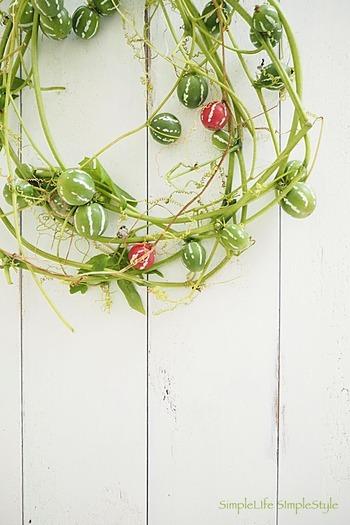 縞模様の入った緑色の小さなウリが、やがて赤く色付いていくオキナワスズメウリ。2cmほどのコロンとした実がなんとも可愛く、近年ではハロウィンやクリスマスの飾り付け用としても人気です。長い蔓を使ってリースにしたり、実だけをインテリアに使ったりと、いろいろな楽しみ方ができます。
