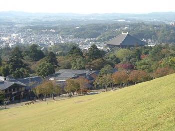 歴史が古い奈良県では、県のあちこちに史跡や寺院があります。また、県の中部・南部は田園風景や豊かな自然も見所で、それぞれの場所ごとに異なる魅力があります。