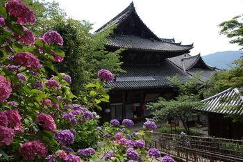 他のエリアに比べると知名度は低いものの、桜井市にも魅力的な観光スポットが点在しています。  長谷寺は四季折々の景観が美しい寺院。特にあじさいは3000株、牡丹は150種類・7000株が植えられていて咲き誇る姿は見事です。