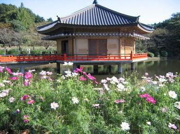「三人寄れば文殊の知恵」の文殊菩薩が祀られている安倍文殊院。 池に浮かぶお堂の他、四季折々の花も美しく、秋にはコスモスで作られた迷路を楽しむことができます。