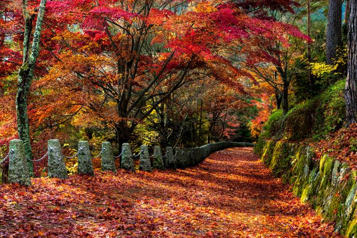 桜だけでなく紅葉の名所でもある吉野山。中でも特にもみじが美しいのが、奥千本にある高城山展望台です。散ったもみじがまるで赤い絨毯のようですね。