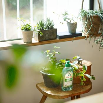 「床掃除は好きだけど、キッチンの掃除は苦手…」というようなウィークポイントが誰にでもあるものです。どうしてもお掃除がおっくうな場所には、素敵な観葉植物を置いてみましょう。たったそれだけで「植物が映えるように、キレイにしておこう」という気持ちになれるんです。