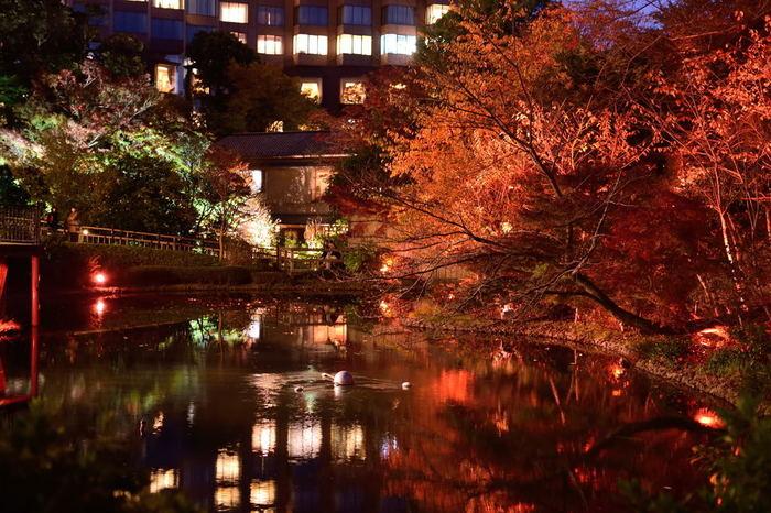 雅で幻想的な光景に、都心にいることを忘れてしまいそう。ライトアップは通年実施されていますが、秋は期間限定で秋バージョンに。2018年は11月1日(木)~12月25日(火)まで秋バージョンになるのでその期間に訪れたらお見逃しなく。