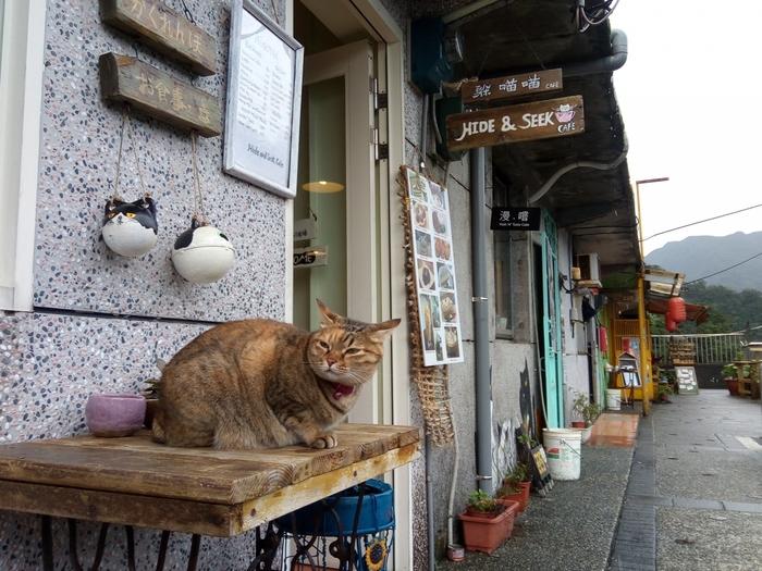 猫がお好きな方ならぜひ訪れていただきたいのが、「猴トン猫村」。  先ほどご紹介した九份からほど近い駅「猴トン駅」周辺のエリアで、猫がたくさん生活しているエリアです。  このエリアに住む人たちと猫が共存している様子が楽しめるエリアですよ。