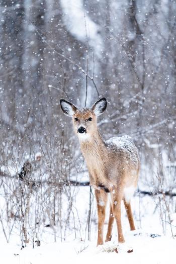 旅行は何も観光だけが目的ではありません。たとえば、世界でそこにしか生息しない貴重な動物達の、檻の中ではなく自然の中を駆け回り、本来の生を謳歌する姿に出会う旅はいかがでしょう?きっとあなた自身も大きなパワーをもらうことができるはず。