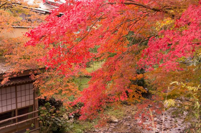 秋月城跡の紅葉は、11月下旬から12月上旬が見頃です。茶店も多いので、紅葉を眺めながらお茶を楽しめるのも嬉しいポイント。のんびり歩いて紅葉に彩られた筑前の小京都を堪能しましょう♪