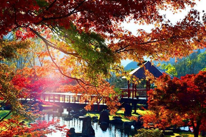 耶馬渓の紅葉は、11月中旬が見頃。耶馬渓では紅葉祭りも行われ、10月中旬~11月下旬の17時~21時までライトアップされる予定です。紅葉の色付きによって変更される場合があるので、お出かけ前に中津耶馬溪観光協会にお問い合わせすると安心です。