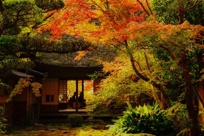庭園と紅葉が織りなす風景は感動的な美しさは、一見の価値ありです!