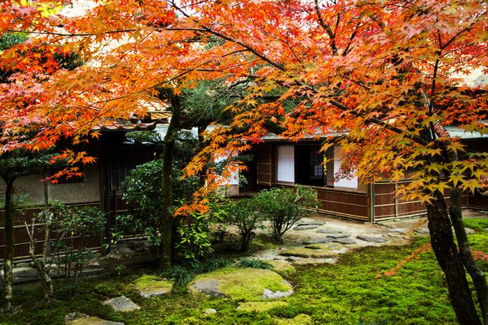 佐賀県神埼市にある「九年庵」。明治25年に実業家・伊丹弥太郎が建てた数寄屋造りの別荘で、1995年に国の名勝に指定されました。普段は一般公開されていない場所で、春と秋の期間限定で一般公開されています。モミジの赤と庭園の苔の緑のコントラストが見事ですね。
