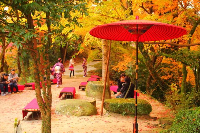 九州には紅葉を楽しめるスポットがたくさんありますが、11月頃から見頃を迎える《福岡・佐賀・大分》のおすすめの紅葉スポットをご紹介します。