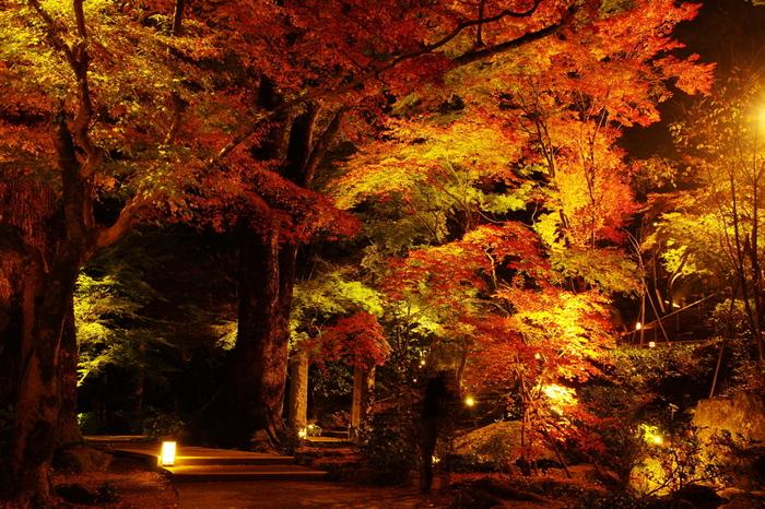 夜のライトアップされた紅葉も人気!今年は、11月15日~12月2日の日没から午後9時までライトアップされます。日中とは違う幻想的な美しさに酔いしれてみませんか?