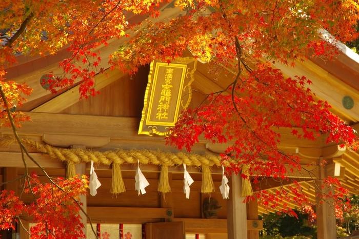 縁結び・厄除け・方除けの神様として知られる「竈門神社」。太宰府天満宮から徒歩30分の場所で、お札お守り授与所が可愛いことから女性に人気の神社です。境内には銀杏や楓などの落葉樹が300本もあり、福岡の紅葉の名所として多くの人で賑わいます。