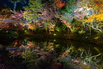 夜になると、ご覧の通りのライトアップ。池に映る紅葉たちが、なんとも幻想的!ぜひ夜間の特別拝観に行ってみたいスポットです。