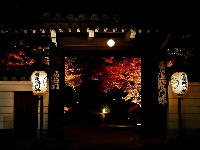 天台宗総本山比叡山延暦寺の三門跡でもある「青蓮院」です。国宝でもある仏画「青不動明王」が祀られています。門からのぞく紅葉のライトアップが、厳かな雰囲気で素敵ですね。青蓮院は、先にご紹介した「知恩院」の北隣に位置します。市バスで神宮道を下車、徒歩3分でアクセス可能です。