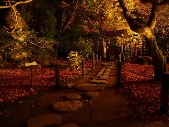 ライトに照らされるお庭の景色も素敵。どこを切り取っても絵になるので、ついつい長居してしまいそう…!「天授庵」は市バスで南禅寺永観堂道を下車し、徒歩約7分のところにあります。