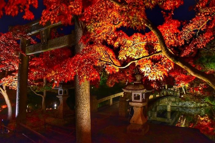 夜のライトアップも、上品に照らされた紅葉が綺麗。しっとり大人な雰囲気なので、デートやひとり旅にも◎。