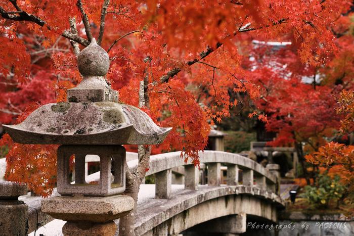 市バスで南禅寺永観堂道を下車、徒歩約3分のところにある「禅林寺 永観堂」は、昔から紅葉の名所として知られ「秋はもみじの永観堂」とまで言われるほど。華やかで豪華な紅葉が楽しめます。本堂に祀られた「みかえり阿弥陀」様も有名です。