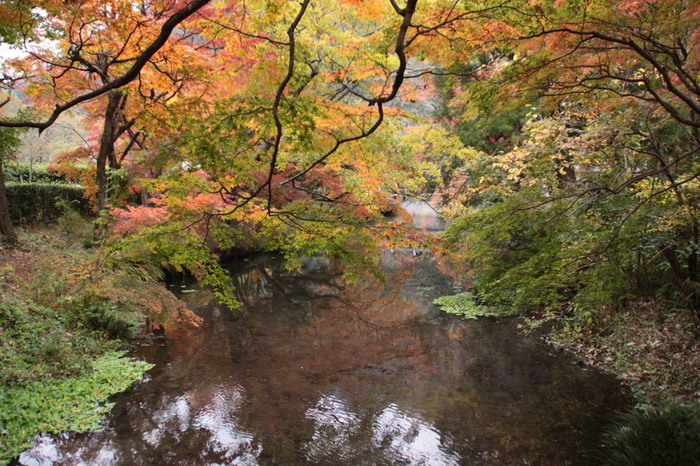 紅葉の見頃は、11月上旬~中旬と言われています。観光地なので周辺にお店が多いのも嬉しいポイント。紅葉に彩られた金鱗湖は、この時期ならではです。