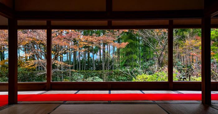 穴場スポットとしておすすめしたい「宝泉院」です。京都バスの大原を下車して歩くこと約15分という、市内から少し離れていることもあって、こんなに素晴らしい「額縁庭園」がゆっくり楽しめるのが魅力です。また、廊下の天井に伏見城の遺構で「血天井」があるのも見どころ。紅葉だけでなく、境内の隅々までお見逃しなく。