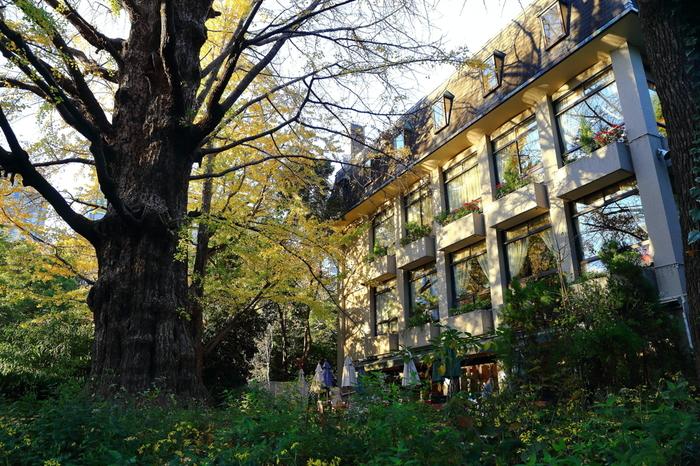 それらの施設の他にも、公園内には有限会社日比谷松本楼が運営するレストラン「日比谷松本楼」があります。松本楼の歴史は古く、1903年の6月に当時としては珍しい洋風レストランとしてオープンしました。