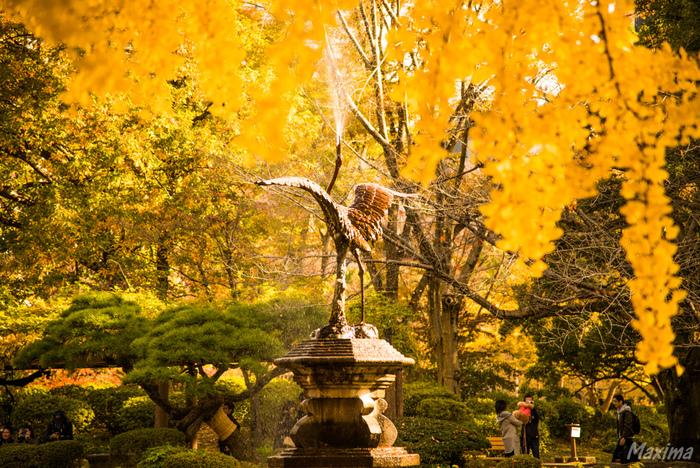 東京都千代田区にある都立公園「日比谷公園」。銀座や霞ヶ関に近いのにも関わらず、161,636.66平米もの広々とした公園内には、日比谷図書文化館、日比谷公会堂や大小の野外音楽堂、テニスコートなどがあります。