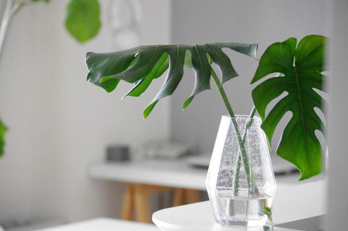 枝が伸びすぎた観葉植物は、カットしたあとの枝も活用。こちらはモンステラをカットして、ガラスの花瓶に生けて涼やかに。
