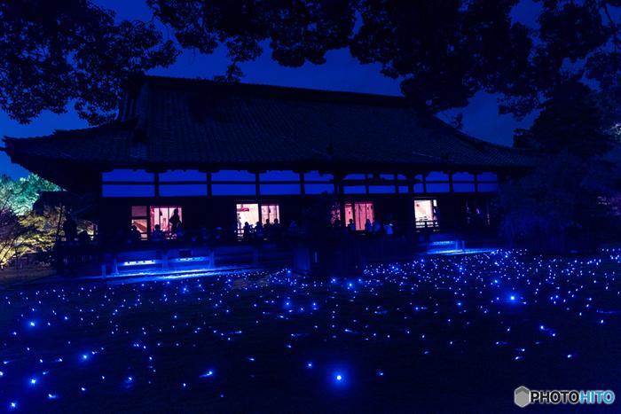 春と秋に行われる夜間特別拝観では、青蓮院の名のとおりの青い光でライトアップされます。幻想的な青色の照明で、一味違った紅葉を楽しむのはいかがでしょう。