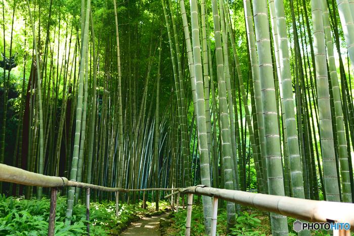 鎌倉駅西口から徒歩約12分の場所にある、鎌倉で唯一の尼寺「英勝寺」。近くには「寿福寺」もあり一緒にまわるのがおすすめです。2013年に重要文化財に指定された仏殿・山門・鐘楼・祠堂・唐門、圧倒的な存在感の竹の庭など、みどころ満載のお寺です。