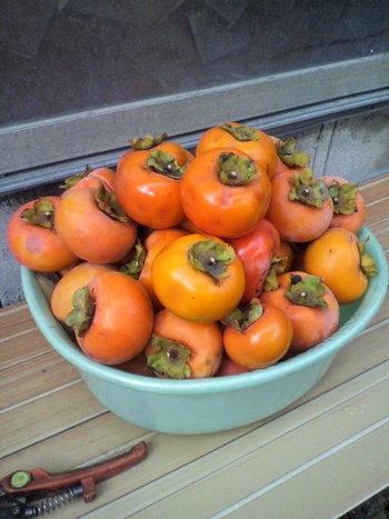 農園によって栽培品種が異なります。たとえば、「富有(ふゆう)柿」や「次郎柿」は、甘柿の代表品種。大玉の「太秋柿」など、品種によって収穫できる時期が違うので、事前に問い合わせてみましょう。