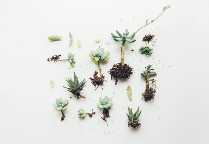 サボテンに限らず花や植物を枯らしてしまうのは、「水が足りない、お腹が空いた」なんて、植物は言葉にして教えてくれないからですよね。何も話さずアピールしてこない植物。好きな人はなぜ好きなのでしょうか。