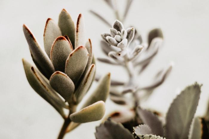 その色合いやグラデーション、模様、光沢は、生きている植物だからこそ出せるものですよね。また、びっしりと産毛で覆われていたり、ツルツルしているなど触覚の違いがあるのも面白いところです。