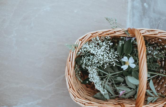 植物は好きですか?とても好きでたくさん育てているという方がいる一方で、サボテンを枯らすほどあまり興味を持てない、という方もいるのではないでしょうか。