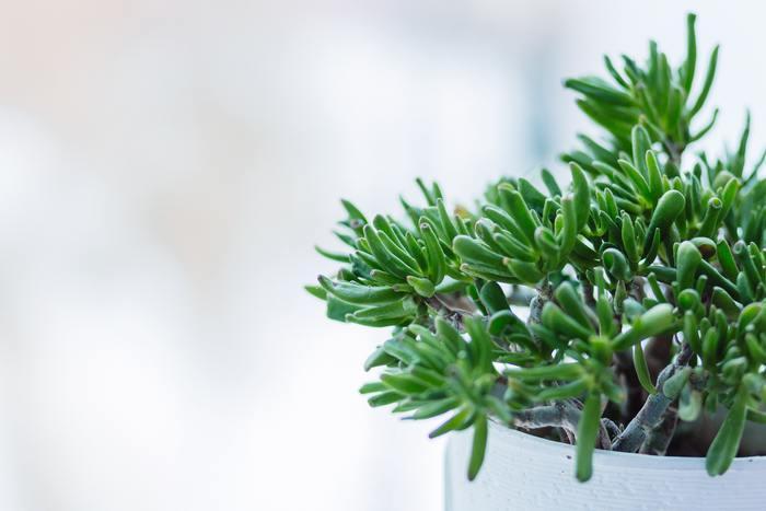 植物は、水や光の過不足や自分ではどうすることもできない状態を受け入れて、常に凛とした姿を見せてくれますね。その姿は、何にもなびかない一本筋の通った潔さを感じさせます。