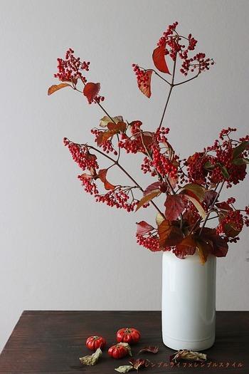 枝もの=緑だけではないんです。紅葉と赤い実が美しい「ガマズミ」を生ければ、お部屋が秋のあたたかな装いに。