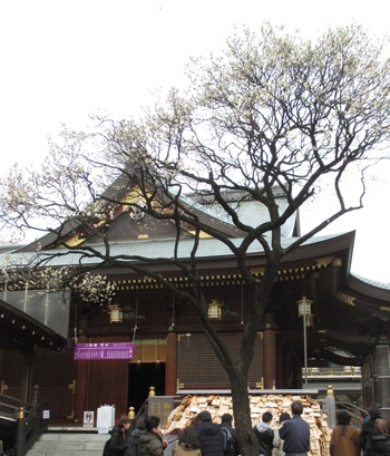 """学業成就や合格祈願で知られる「湯島天神」は、江戸時代から""""梅の名所""""としても多くの庶民に親しまれてきました。今でも毎年2月から3月に「梅まつり」が開催され、冬から春の風物詩となっています。"""