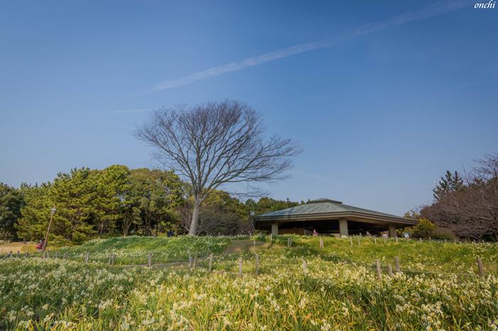 水仙畑を歩くと、上品な香りにうっとり。毎年2月には「水仙まつり」が開催され、ライトアップや大道芸なども行われます。昼間は水族館、夕方は水仙のライトアップ…と丸1日楽しめますよ。