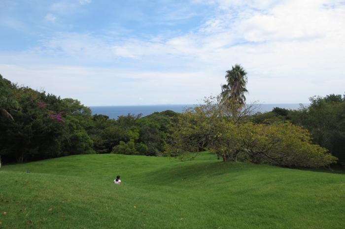 芝生広場からは海が一望できます。自然豊かで気持ちの良い伊豆大島で、椿を愛でながら1日を過ごしてみませんか?