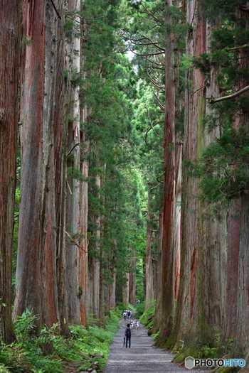 善光寺参りと共に参拝したい戸隠神社。樹齢1000年を超すという杉や、約2km続く杉並木は圧倒的な迫力と美しさ。善光寺と共に、戸隠も有数のパワースポットとして数えられています。