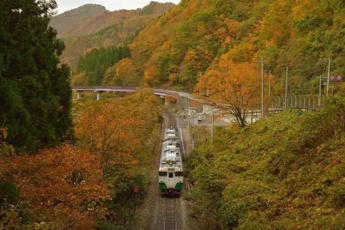 福島県を流れる只見川沿いを走るJR只見線は、福島県の会津若松駅から新潟県の小出駅を結ぶ鉄道路線。  「紅葉の絶景を楽しめる路線」として高い人気があり、列車の車窓から眺められる美しい紅葉を楽しみに、福島県内のみならず、全国各地から多くの人が訪れます。奥会津の豊かな自然のなかを走り抜け、紅葉の壮大なパノラマを楽しむことができますよ。