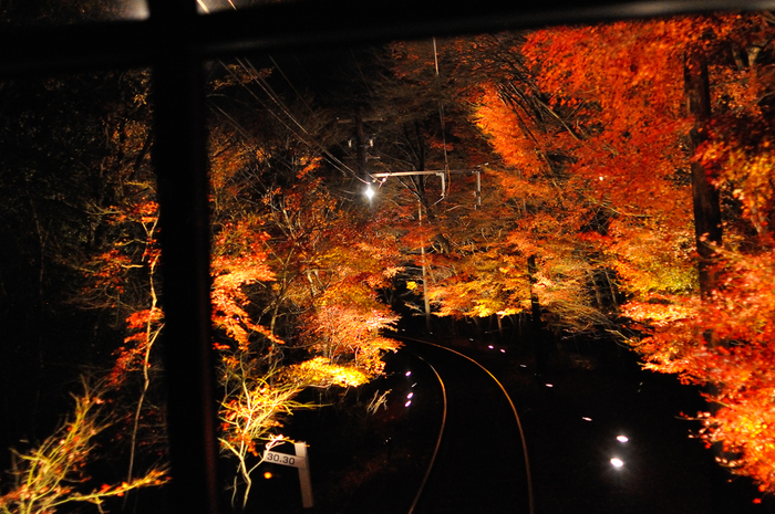 二ノ瀬駅~貴船口駅までの区間がライトアップされる「貴船もみじ灯篭」も開催されるので、こちらも要チェック。今年のライトアップ期間は11月3日~11月25日です。  ライトの光に浮かび上がる、錦秋の景色を楽しむことができますよ。夜の紅葉狩りは、日中とは異なり、とても幻想的な雰囲気になります。「少し趣が違う紅葉狩りを楽しみたい!」という方におすすめです。