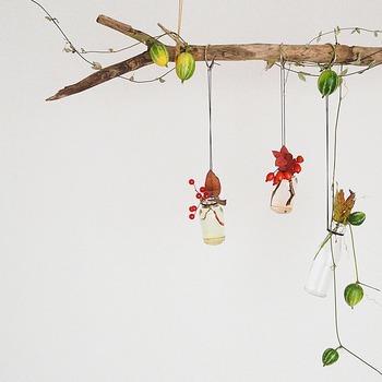 スパイスの空き瓶をレザー紐や麻ひもでぶら下げ、お水のいらないドライの実ものを挿して楽しむ小さなインテリアです。 カラスウリや鈴バラいった秋色の実を、空き瓶と組み合わせるだけでこんなに可愛いとは…。流木にもさり気なくカラスウリが巻き付いているのが素敵です。