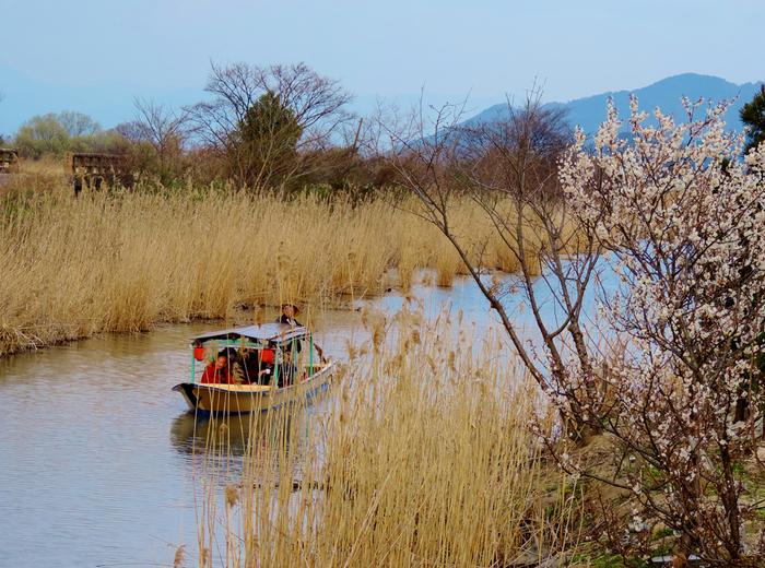 琵琶湖と西の湖をつなぐ水路を水郷(すいごう)と呼び、八幡堀もこの水郷の一つです。水郷は手漕ぎ船で巡ることができ、西の湖の葦原をはじめ四季折々の景色を楽しむことができます。