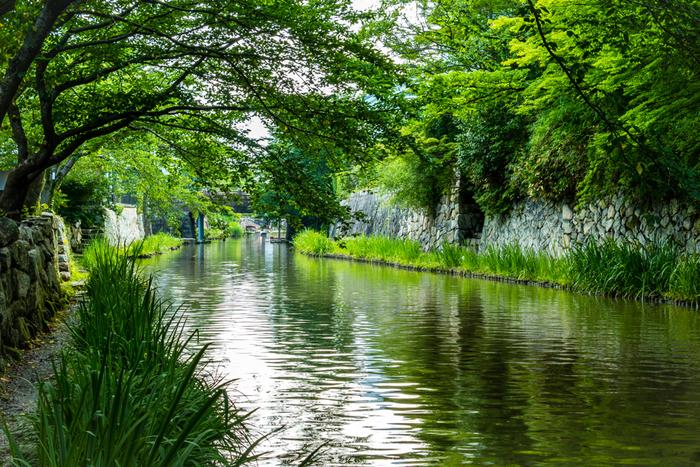 琵琶湖の東南に位置する近江八幡。琵琶湖をはじめ、琵琶湖の内湖である西の湖(にしのこ)、そしてこの二つの湖を結ぶ水郷が織り成す美しい景観が魅力です。
