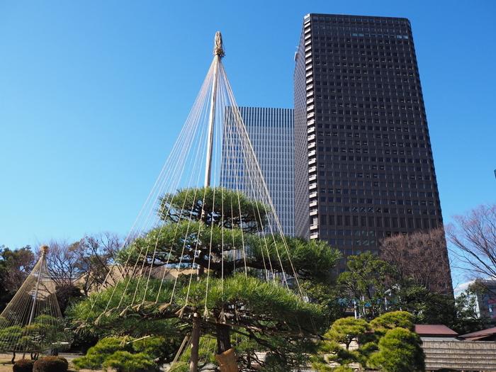 雪から枝を守るための「雪吊り」は冬の風物詩。ビルが立ち並ぶ都心で、真冬でも青々と茂る樹木を見るのも良いですね。